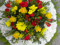 Posy Pad Funeral Tribute - Edged in Foliage, based in White Chrysanthemums with a spray of flowers in Yellow and Red
